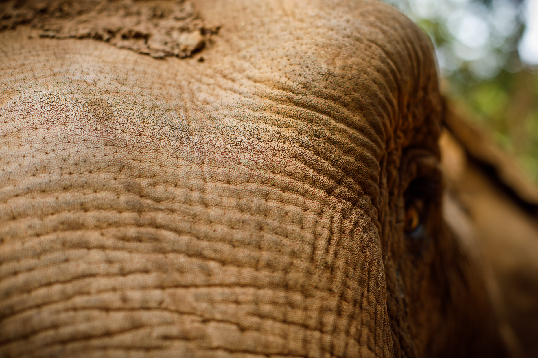 Detail of an elephant