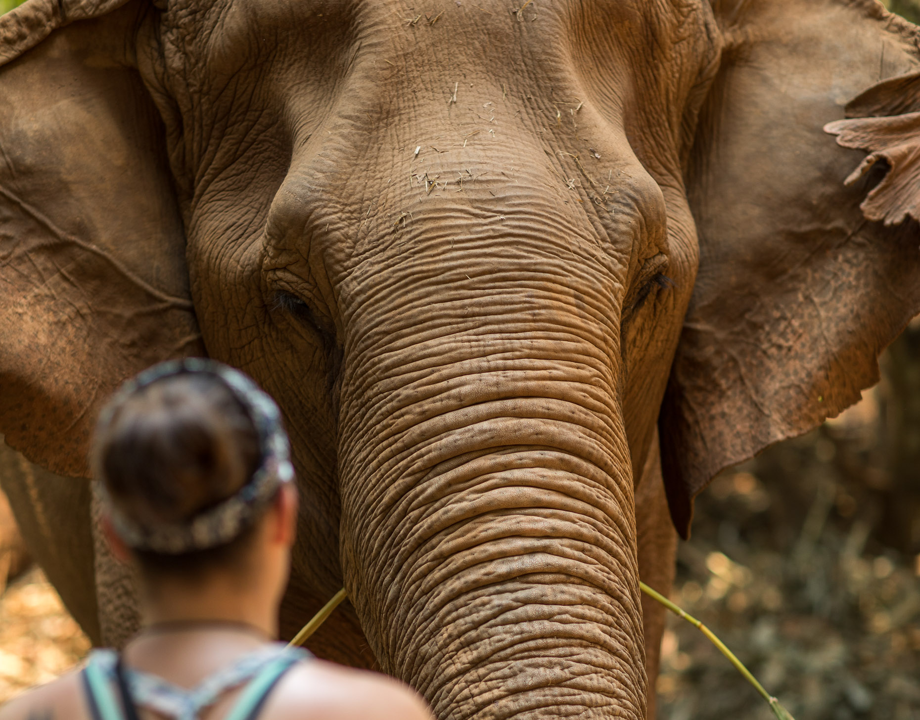 Woman stands face to face with an elephant
