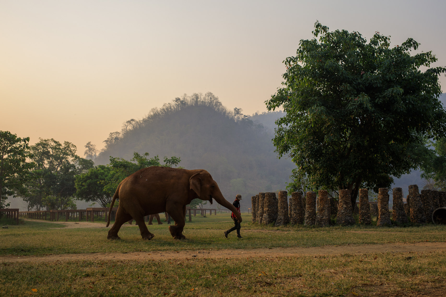 Elephant lead by a mahout in northern Thailand
